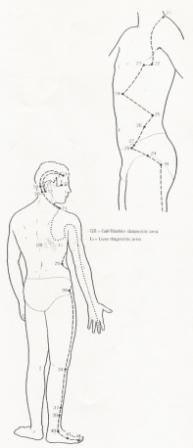 Gall bladder meridians